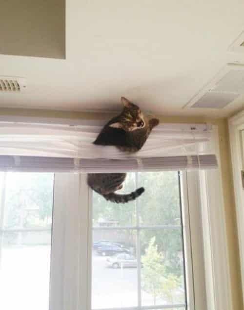 Кот в доме хозяин!) 10 самых странных мест для отдыха, которые выбирают кошки рис 8
