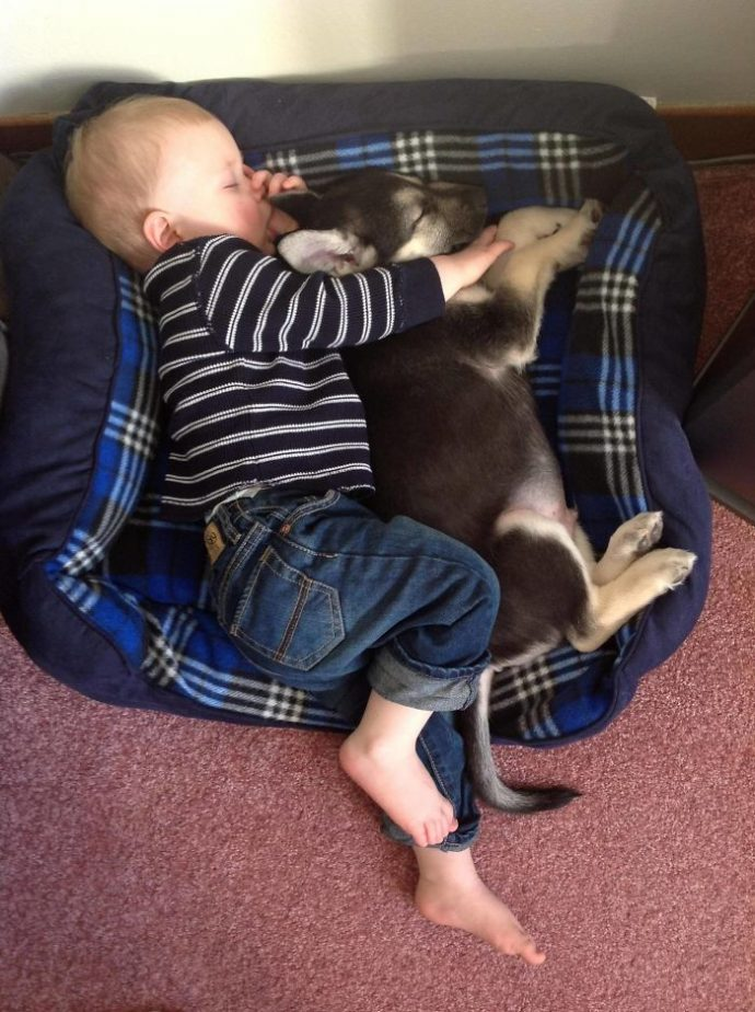Живая подушка на страже сна! 10 самых умилительных фото спящих детей и их любимцев рис 7
