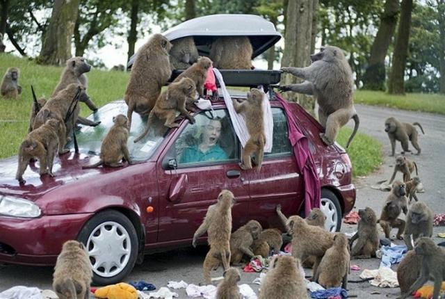 Это кто тут царь на Земле? Животные просто хотели познакомиться, но что-то пошло не так! :) рис 3