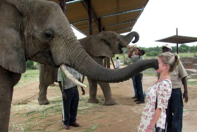 Это кто тут царь на Земле? Животные просто хотели познакомиться, но что-то пошло не так! :) рис 10