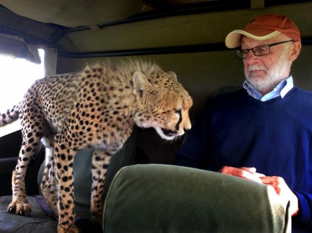 Это кто тут царь на Земле? Животные просто хотели познакомиться, но что-то пошло не так! :) рис 11