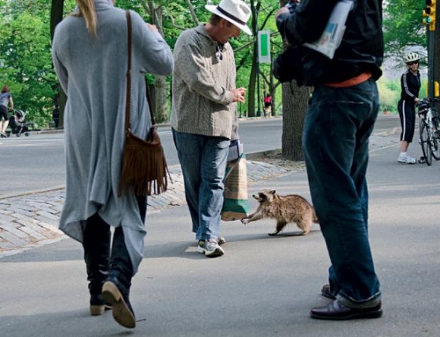 Это кто тут царь на Земле? Животные просто хотели познакомиться, но что-то пошло не так! :) рис 15