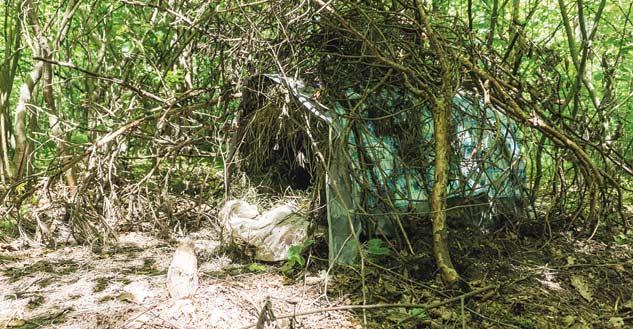 Верность, которой нет границ! Оставленная в лесу собака ждёт возвращения хозяина больше 3 месяцев… рис 2