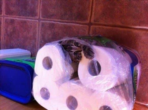 Кот в доме хозяин!) 10 самых странных мест для отдыха, которые выбирают кошки рис 9