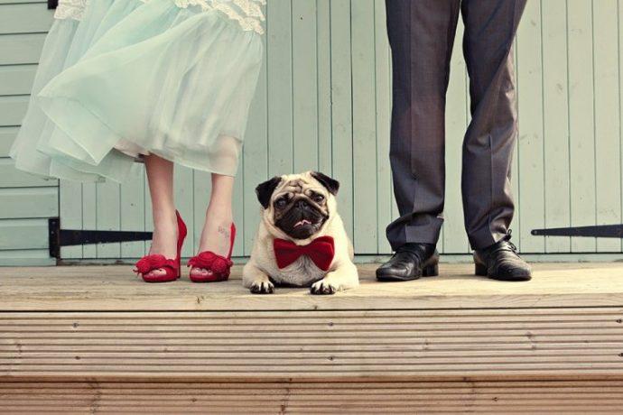Без кота и свадьба не та! Как нарядить любимчика на свадебное торжество? рис 10