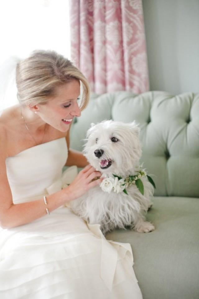Без кота и свадьба не та! Как нарядить любимчика на свадебное торжество? рис 7