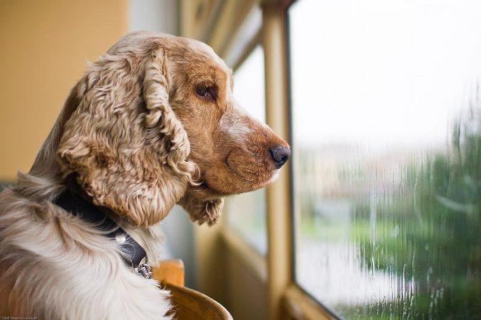 Вы - всё, что у них есть! 18 вещей, которые собака хотела бы вам рассказать... рис 7