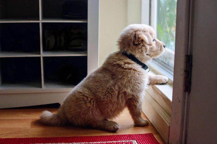 Вы - всё, что у них есть! 18 вещей, которые собака хотела бы вам рассказать... рис 9