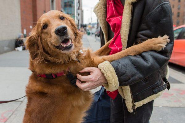 Вы - всё, что у них есть! 18 вещей, которые собака хотела бы вам рассказать... рис 8
