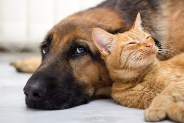 Dogs_Cats_437526