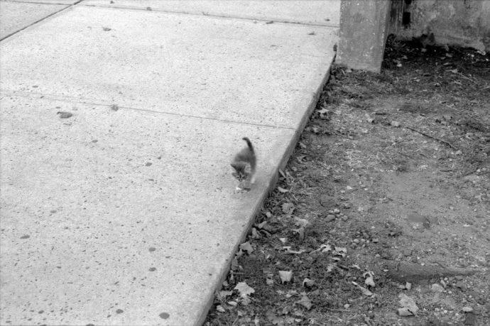 Маленькие лапки бежали за парнем... Больная Марго молила о помощи и она её получила!