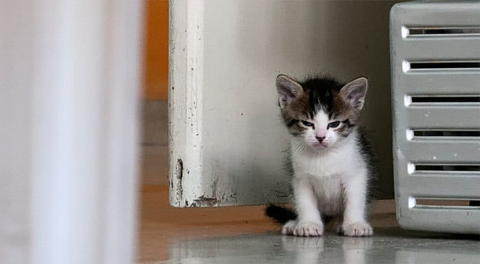 angry-kittens-11-591af1a7be338__700