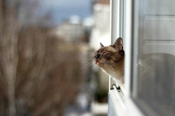 Определяем настроение по направлению усов! Новые интересности про наших любимых кошек :) рис 5