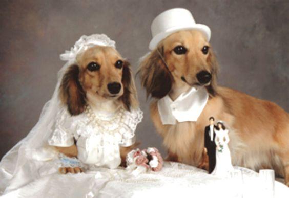 Без кота и свадьба не та! Как нарядить любимчика на свадебное торжество? рис 3