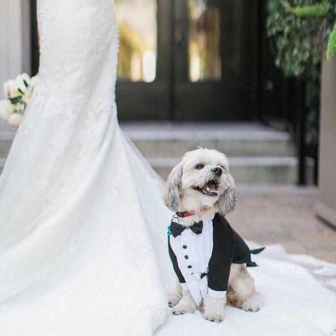 Без кота и свадьба не та! Как нарядить любимчика на свадебное торжество? рис 6