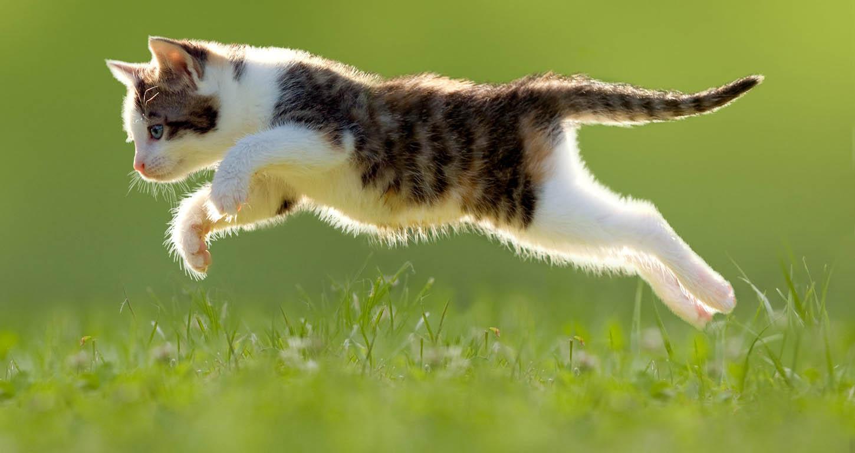 картинка кот бежит на работу перелет