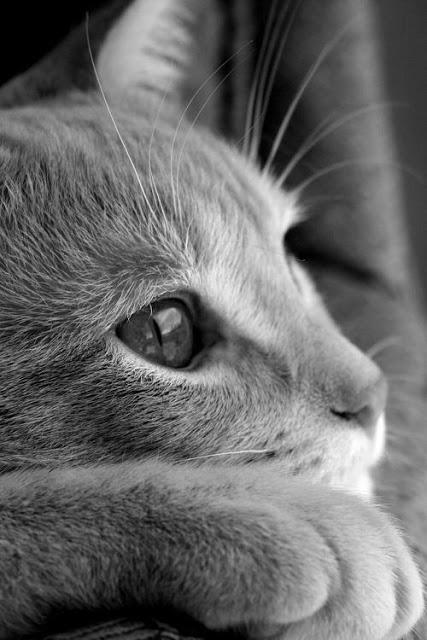 Горячо любимый кот Кузьма, который забрал себе мою болезнь... рис 3