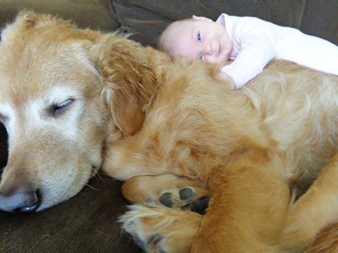 Живая подушка на страже сна! 10 самых умилительных фото спящих детей и их любимцев рис 5