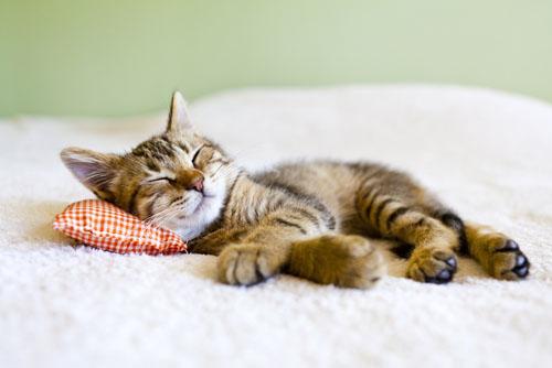 Определяем настроение по направлению усов! Новые интересности про наших любимых кошек :) рис 4