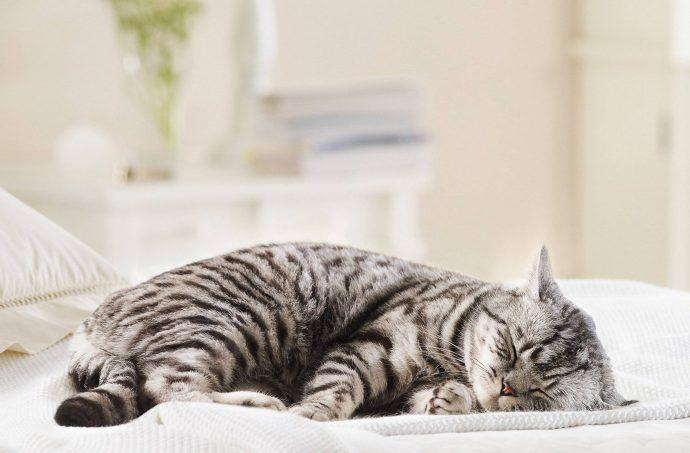 По расцветке кота можно судить... о характере! Интересные исследования Гэри Вайцмана рис 3