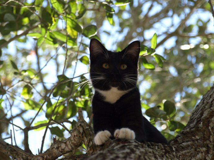 Определяем настроение по направлению усов! Новые интересности про наших любимых кошек :) рис 8