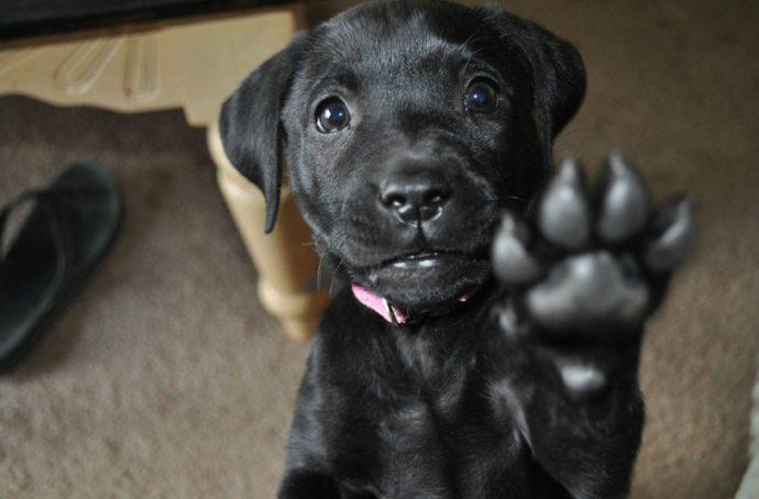 Вы - всё, что у них есть! 18 вещей, которые собака хотела бы вам рассказать... рис 6