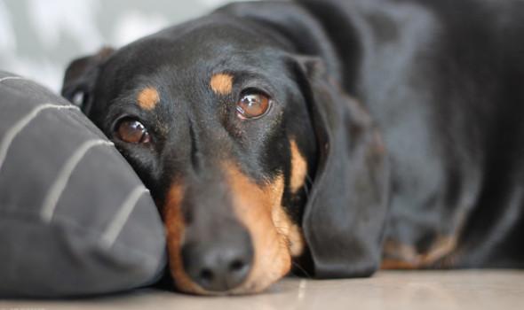 Вы - всё, что у них есть! 18 вещей, которые собака хотела бы вам рассказать... рис 14