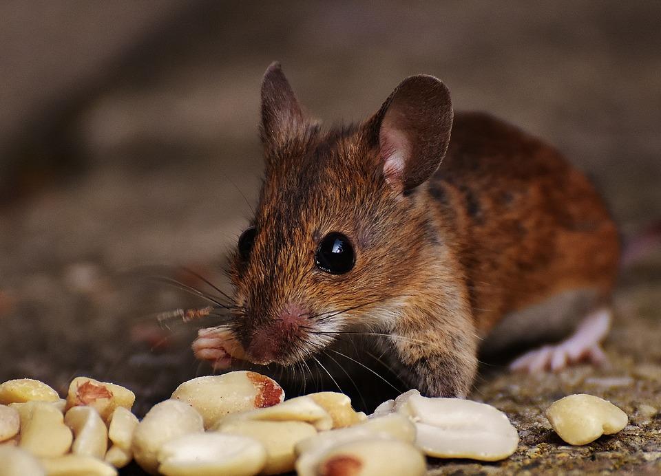 Благодарный мышонок! Невероятная история читательницы о крошке, которая тоже - маленькая жизнь!