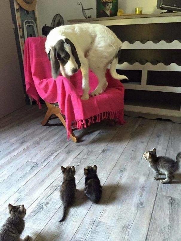 Коварное нападение кабачка на корги! 13 самых смешных фото о том, чего боятся собаки!) рис 2