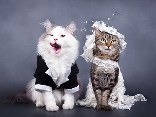 Без кота и свадьба не та! Как нарядить любимчика на свадебное торжество? рис 2