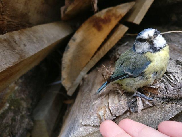 Необыкновенной красоты птица приземлилась ей прямо в ладонь... Но зачем?! рис 2