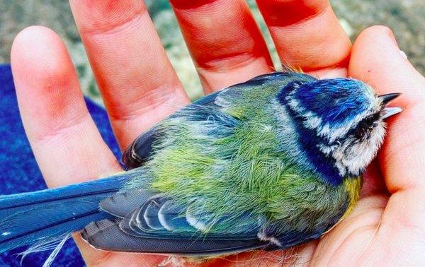 Необыкновенной красоты птица приземлилась ей прямо в ладонь... Но зачем?!