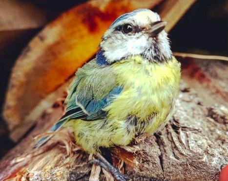 Необыкновенной красоты птица приземлилась ей прямо в ладонь... Но зачем?! рис 4