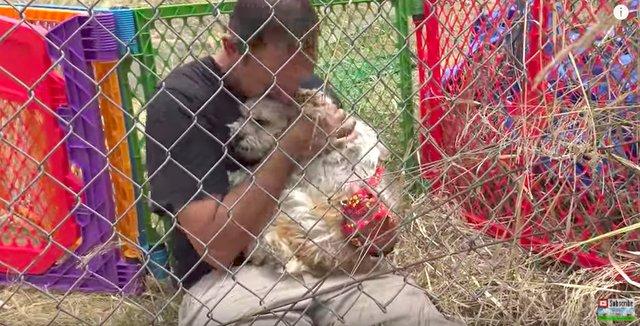 Собачка была настолько умной, что спасатели не могли поймать ее 7 дней! Но она нуждалась в помощи... рис 10