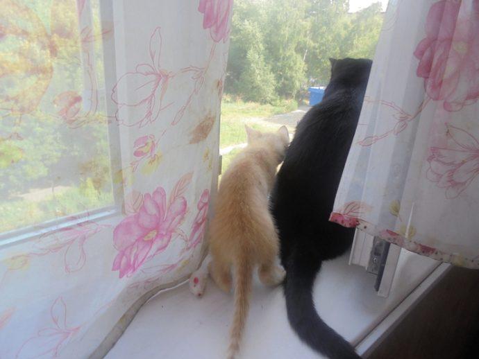 Три жизни в стеклянной банке... Парень увидел их на прогулке - и его сердце сжалось! рис 3