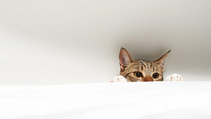 По расцветке кота можно судить... о характере! Интересные исследования Гэри Вайцмана