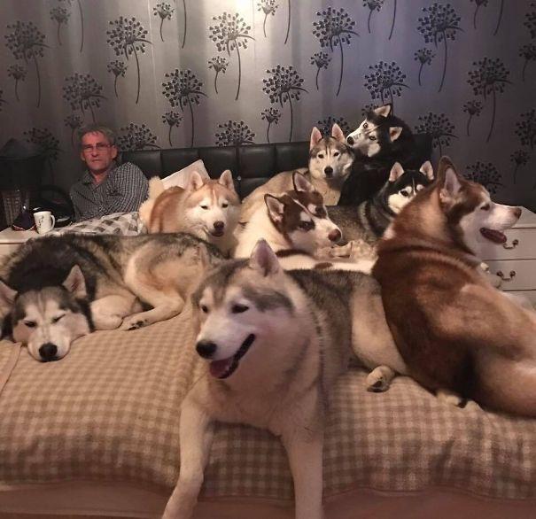 Питомцев много не бывает! :) Забавные фото из жизни людей, которые не смогли остановиться на одном питомце...
