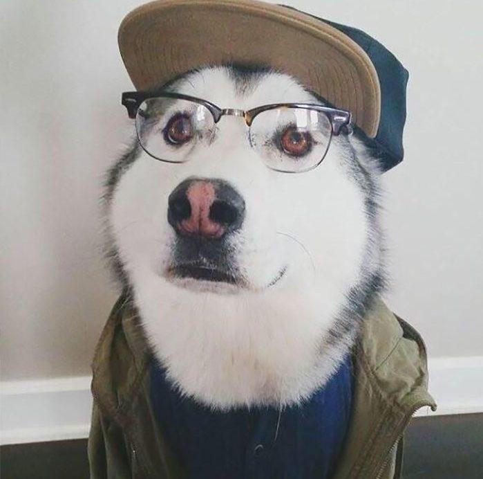 «Хозяин, теперь я тоже человек!» Эти собаки слишком удачно замаскировались под людей! :) рис 11