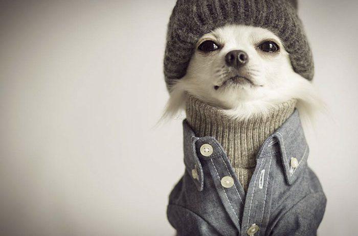 «Хозяин, теперь я тоже человек!» Эти собаки слишком удачно замаскировались под людей! :) рис 10