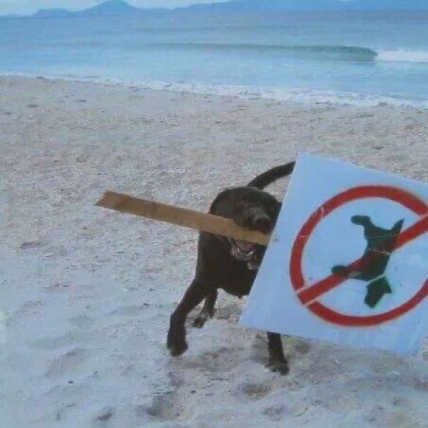Настоящие бунтари! Животные, которым плевать на придуманные людьми правила! :) рис 12