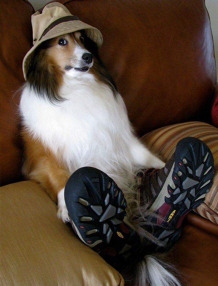 «Хозяин, теперь я тоже человек!» Эти собаки слишком удачно замаскировались под людей! :) рис 3
