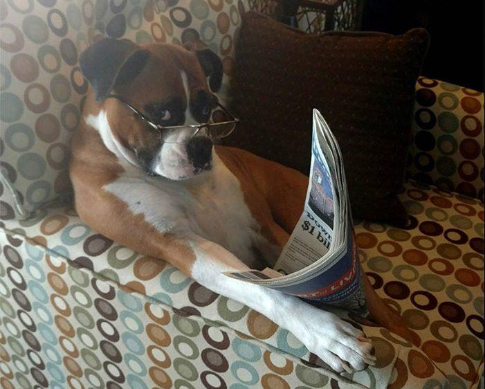 «Хозяин, теперь я тоже человек!» Эти собаки слишком удачно замаскировались под людей! :) рис 2