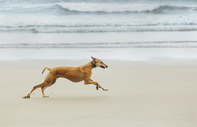 2-beachrun