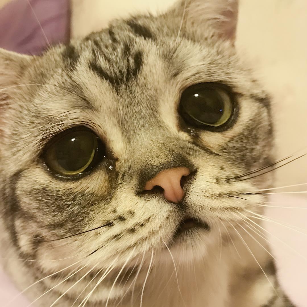 Картинка котенка с грустными глазами