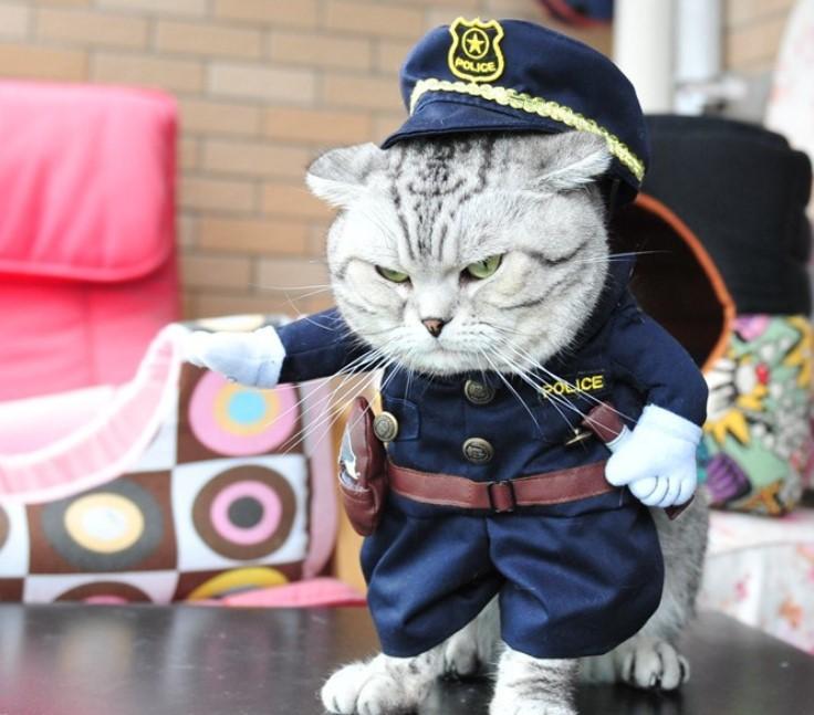 Неужели это - для живых котов?! Обзор весёлых, но бесполезных костюмов для вашего питомца рис 2