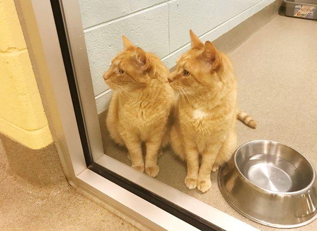 Они не разлучались 12 лет, а потом потеряли хозяев... Но кто же приютит сразу двух котов?!
