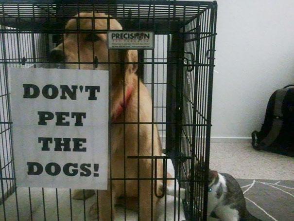 Настоящие бунтари! Животные, которым плевать на придуманные людьми правила! :) рис 5
