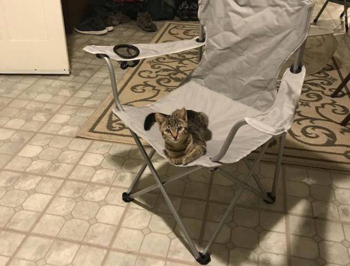 Cat-on-Chair-Nigeltown-Imgur