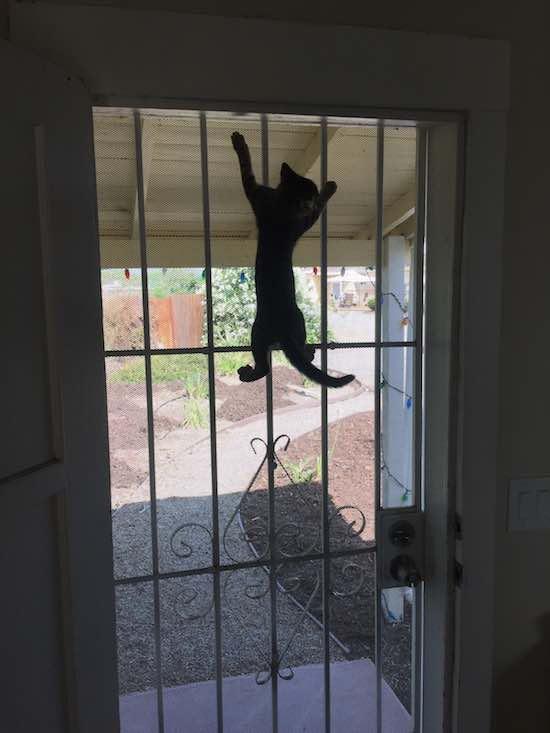 Cat-on-Door-Nigeltown-Imgur