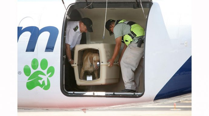 Airline For Pets Starts Flying In Select US Cities